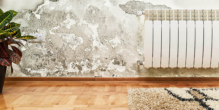How to identify and remove mold from your home.